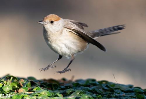 תמונות ציפורים צולמו במשאבי שדה