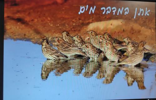 אתן במדבר מים מצגת של עוזי פז